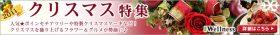 IWellness 2011冬クリスマス特集