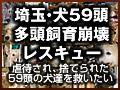 埼玉・犬59頭多頭飼育崩壊レスキュー